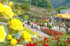 島田市ばらの丘公園