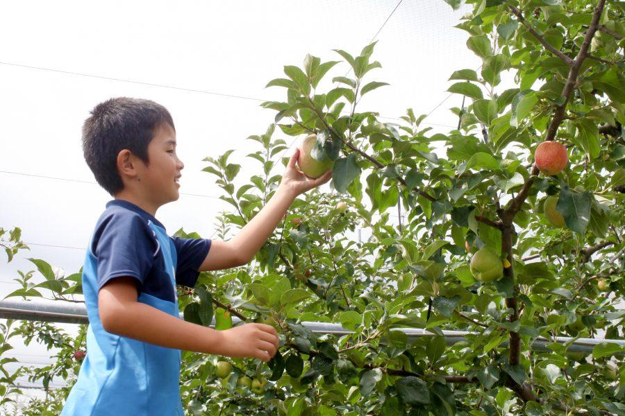 ひろみちゃんのりんご園