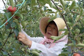 大井川のいいもの&たのしい人_Vol.2『ひろみちゃんのりんご園』