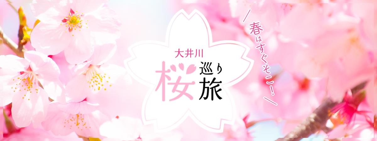 春はすぐそこ!大井川の桜巡り旅