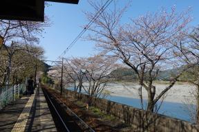 SL de 花見 〜大井川鐵道とあぷとライン〜