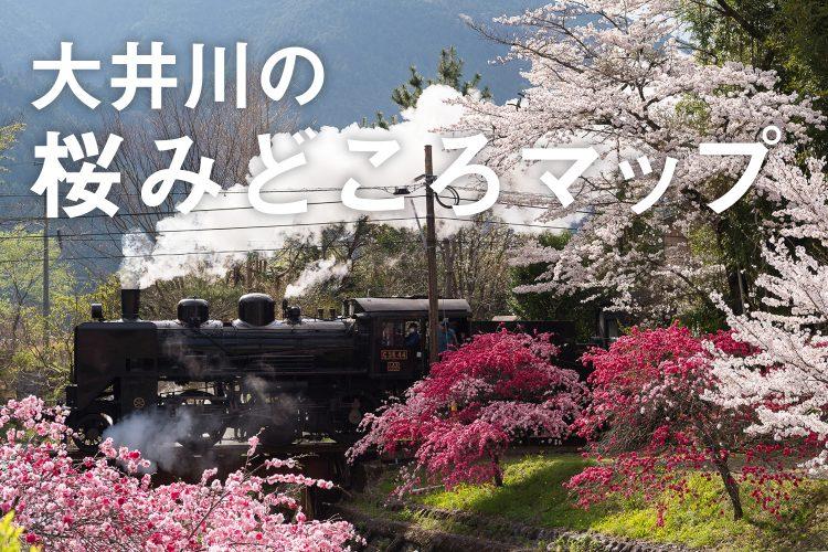 大井川ならではの桜の名所をご紹介!家族や恋人、友達とお花見を楽しんでね。 >>>