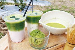 Matcha Organic Japan