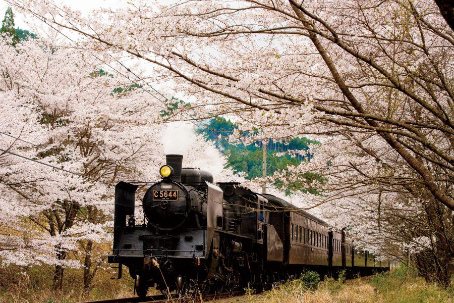 春は大井川鐵道で桜を見に行こう♪大井川春の1泊2日モデルコース