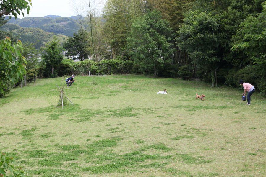 島田市ばらの丘公園 ドッグラン